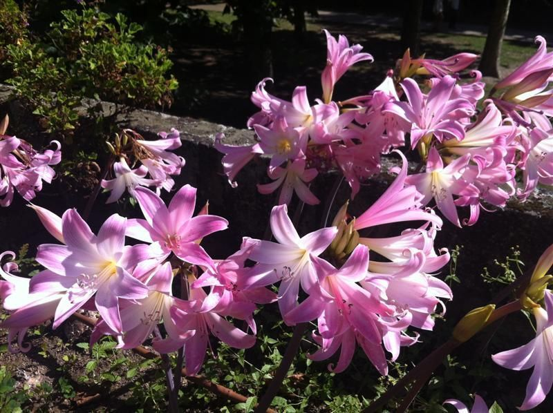 botanico_porto%2012