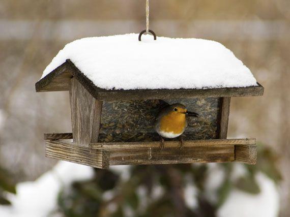 como-atraer-pajaros-invierno-gardencenterejea-3894