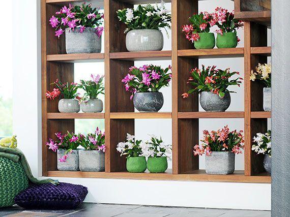 decoracion-navidad-flores-cactus-gardencenterejea-389475