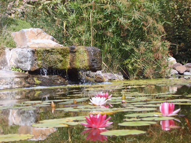 estanques en los jardines (1)