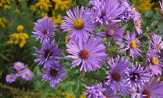 flores-septiembre-agenda-del-jardin