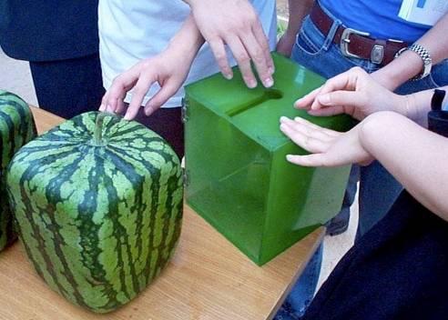 frutas formas 3