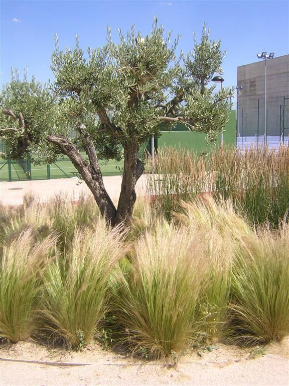 grasses%2010