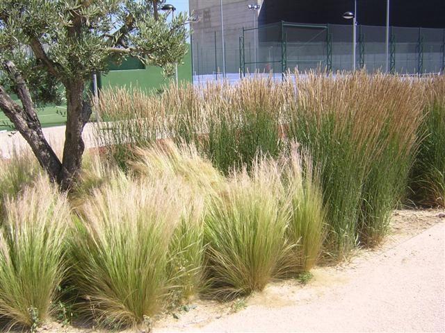 grasses%205