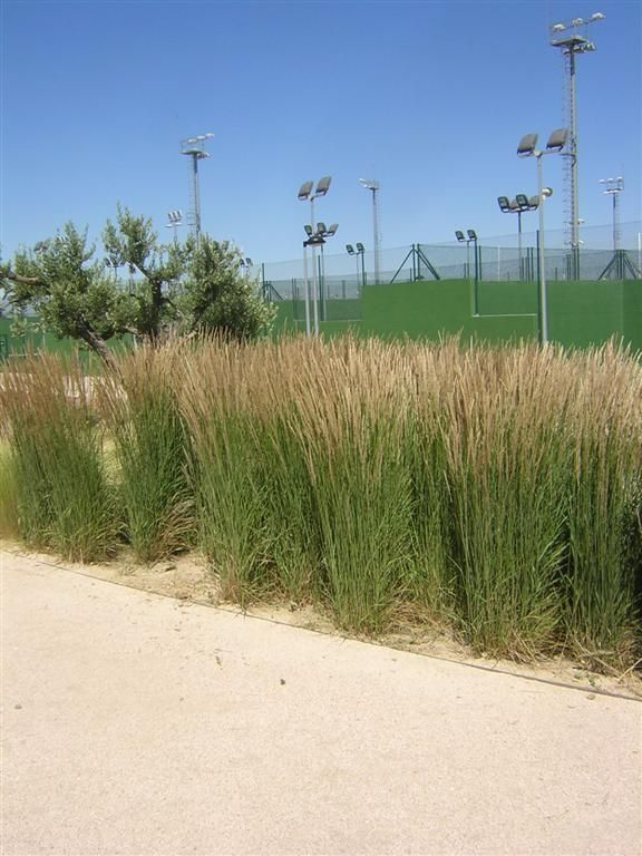 grasses%209