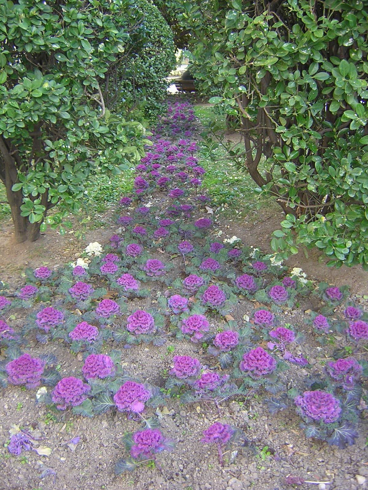 Hortalizas ornamentales blog garden center ejea - Garden center ejea ...