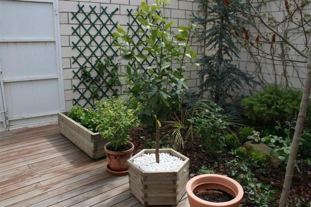 jardinmarisa%2011