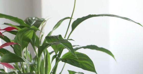 plantas-de-interiores-garden-center(1)