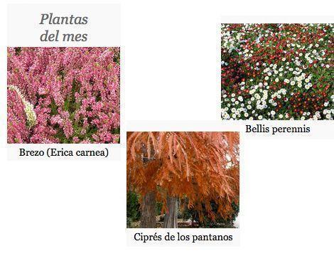 plantas-del-mes-de-noviembre-gardencenterejea-349587