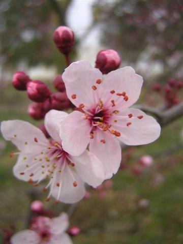 primavera%20002