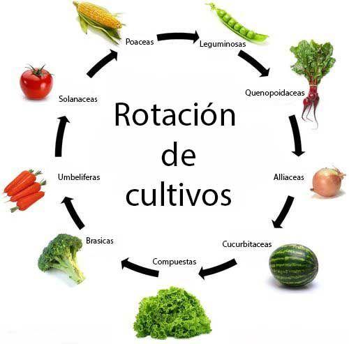 rotacion