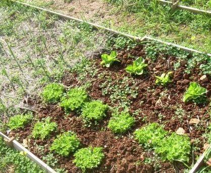 sembrar-huerto-jardin-gardencenterejea-3458