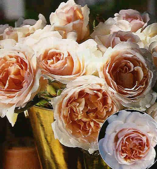 Rosales trepadores el rosal trepador blog garden center ejea - Rosales trepadores perfumados ...