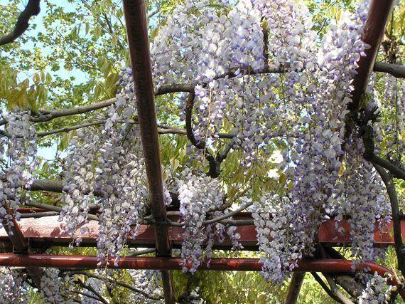 aromas-fragancias-flores