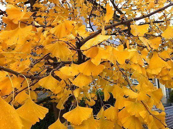 colores-mes-otono-para-jardin-gardencenterejea-34589345
