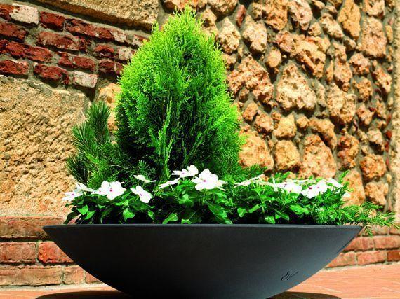 coniferas-enanas-macetas-gardencenterejea-345879