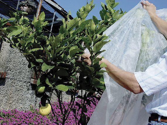 Como cuidar tus plantas en invierno blog garden center ejea - Plantas de invierno ...