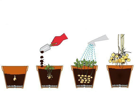 cultivo-patatas-terraza-exterior-gardencenterejea-9783534598