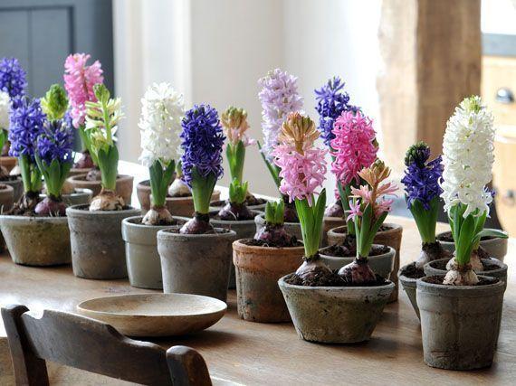 flores-bulbos-navidad-gardencenterejea-35789