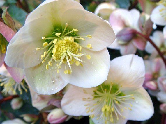 flores-de-frio-gardencenterejea-873453