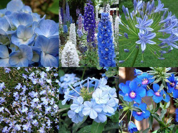 flores-frias-para-verano-89353221