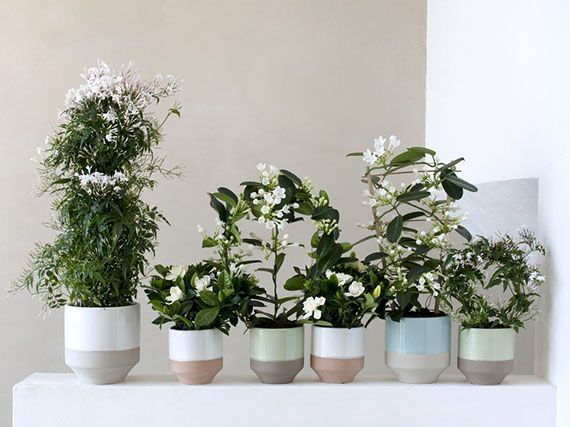 fragancias-flores-blancas-interior-casa-gardencenterejea-384