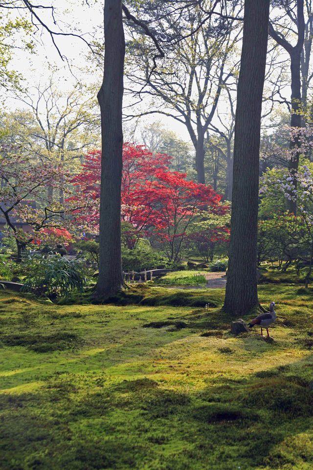 jardin_japones%207
