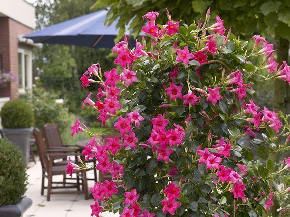 miles-de-flores-para-verano