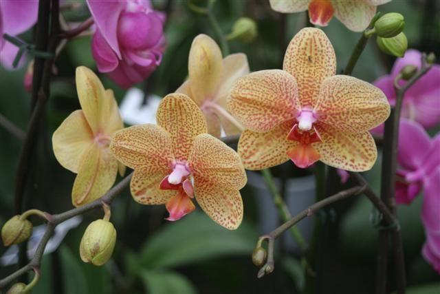 Cuidados b sicos en las orquideas blog garden center ejea for Cuidados orquideas interior