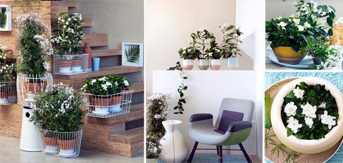 planta-del-mes-febrero-gardencenterejea-34578