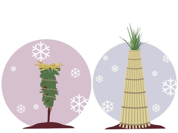 plantas-a-salvo-de-frio-invierno-heladas-gardencenterejea-34