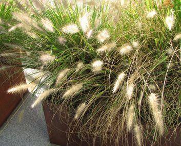 plantas-mes-septiembre