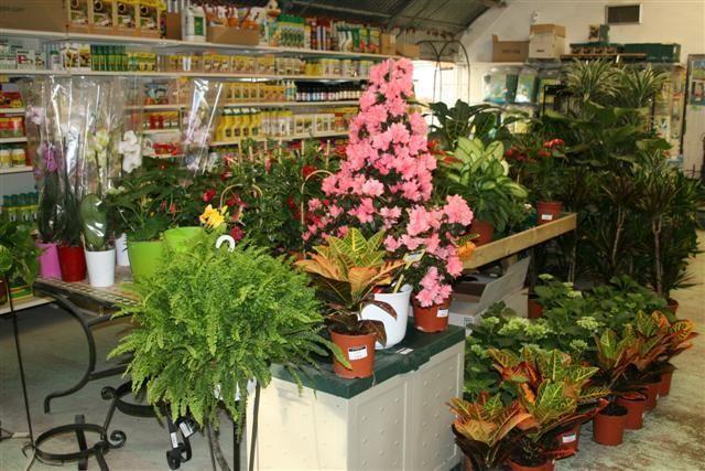 plantas_sanas%201