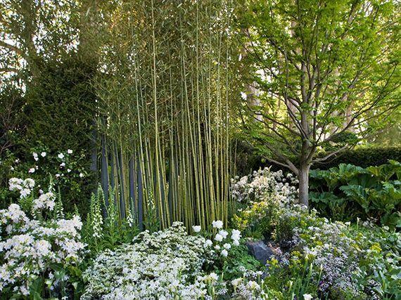 propiedades-del-bambu-gardencenterejea-345786