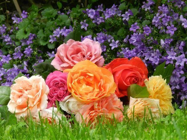 rosas_online