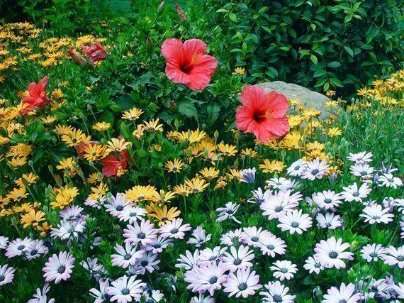 trucos-floracion-flores-plantas