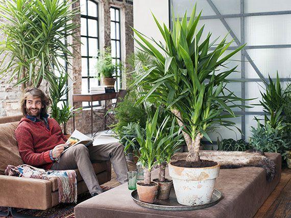 yuca-plantas-de-interior