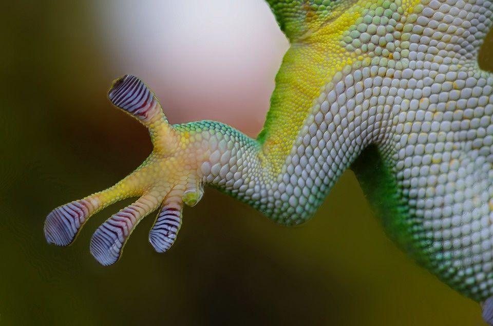 Consejos incubar reptil