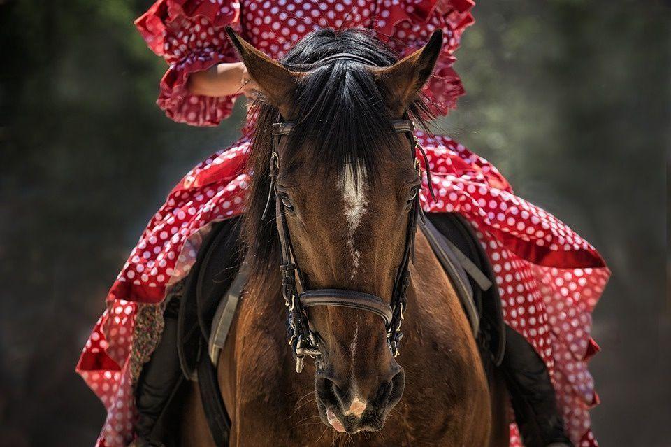 beneficios-caballo
