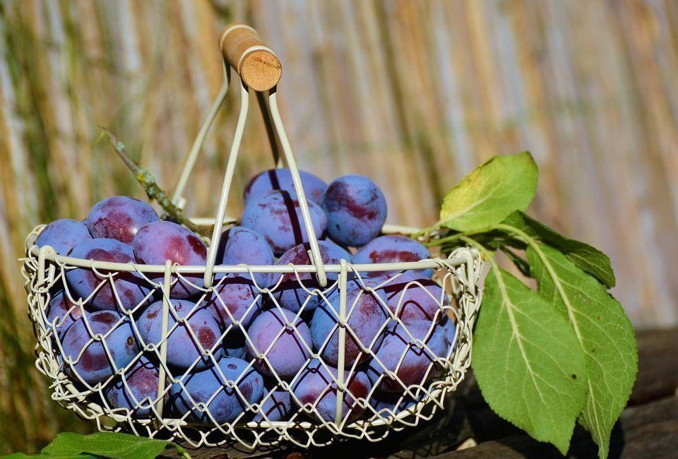 ciruelo-frutales