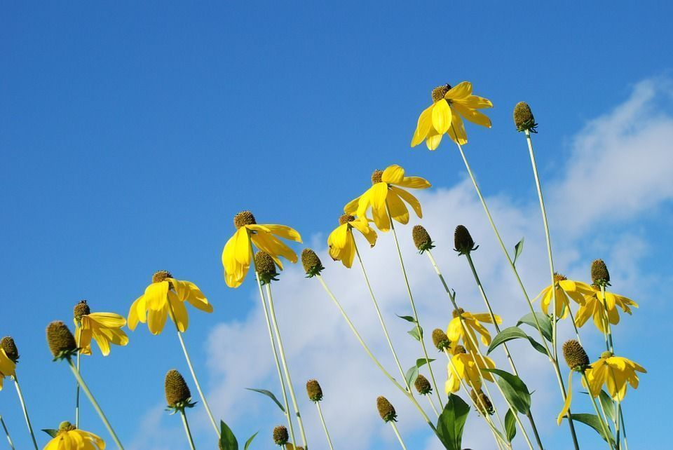 flores-toleran-calor
