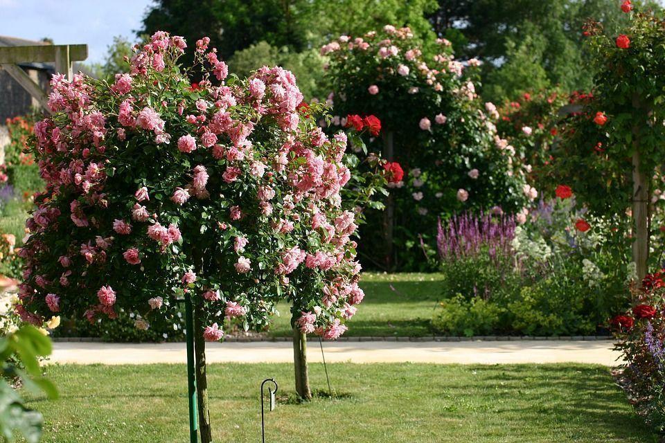 jardin-de-rosas