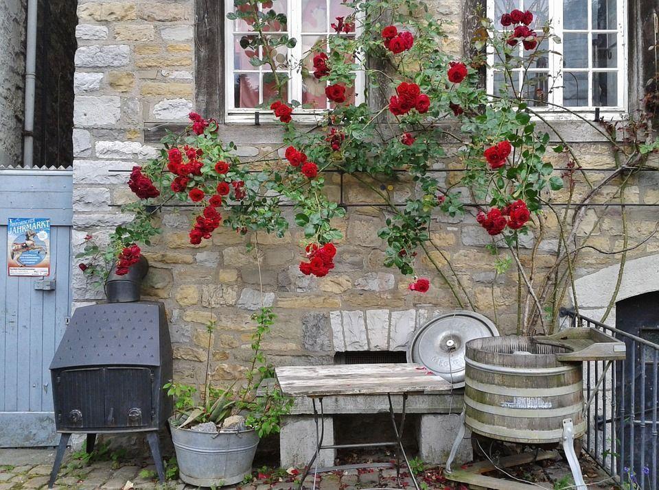 rosas-rojas