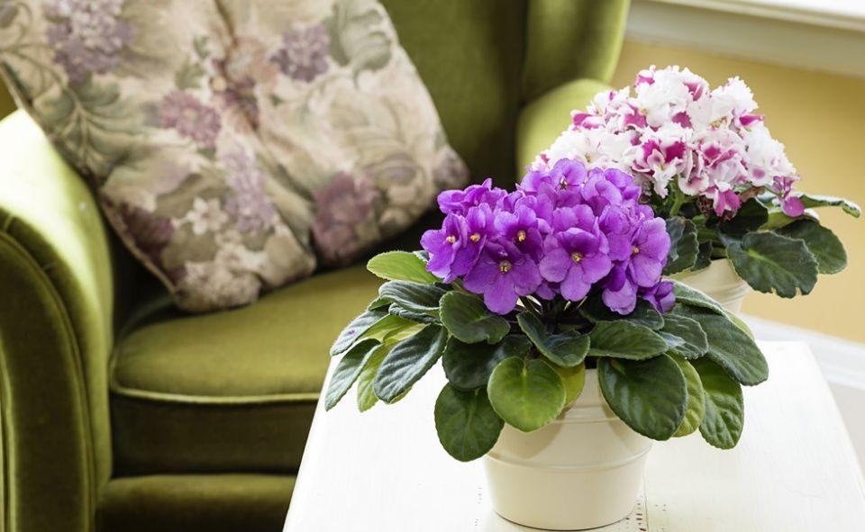 Consejos para decorar la casa con plantas - Consejos para decorar la casa ...
