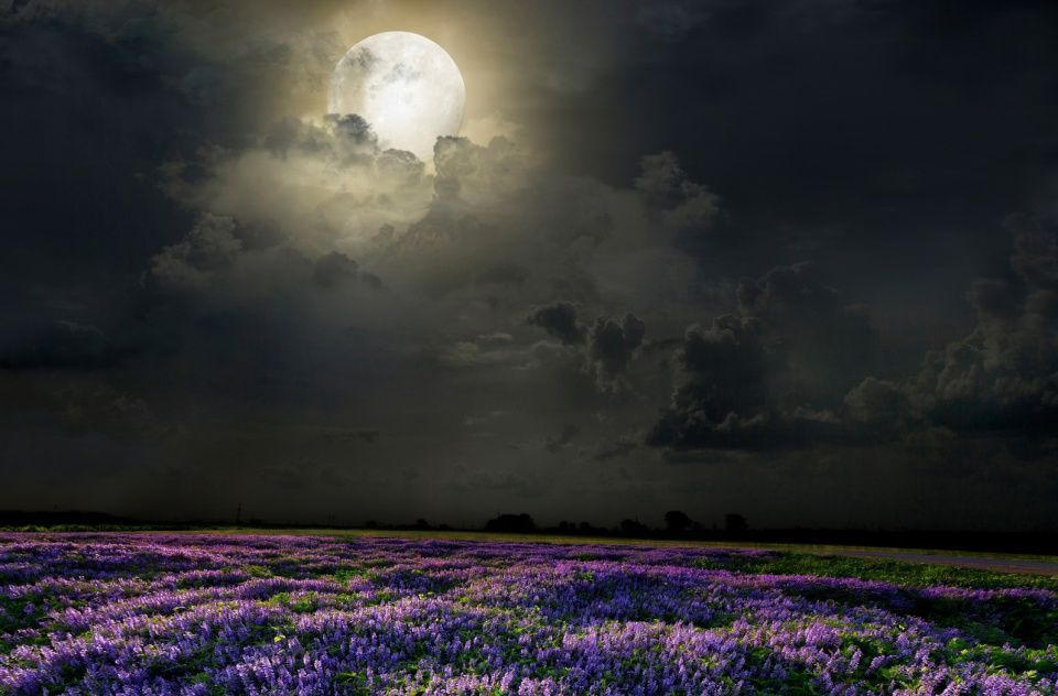 luna-plantas