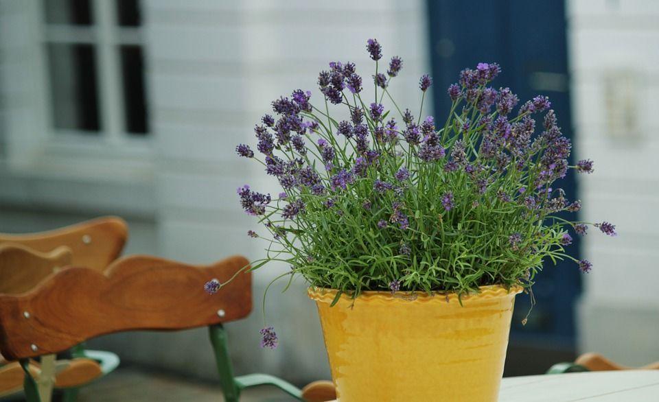 plantas-armonizar-ambientes