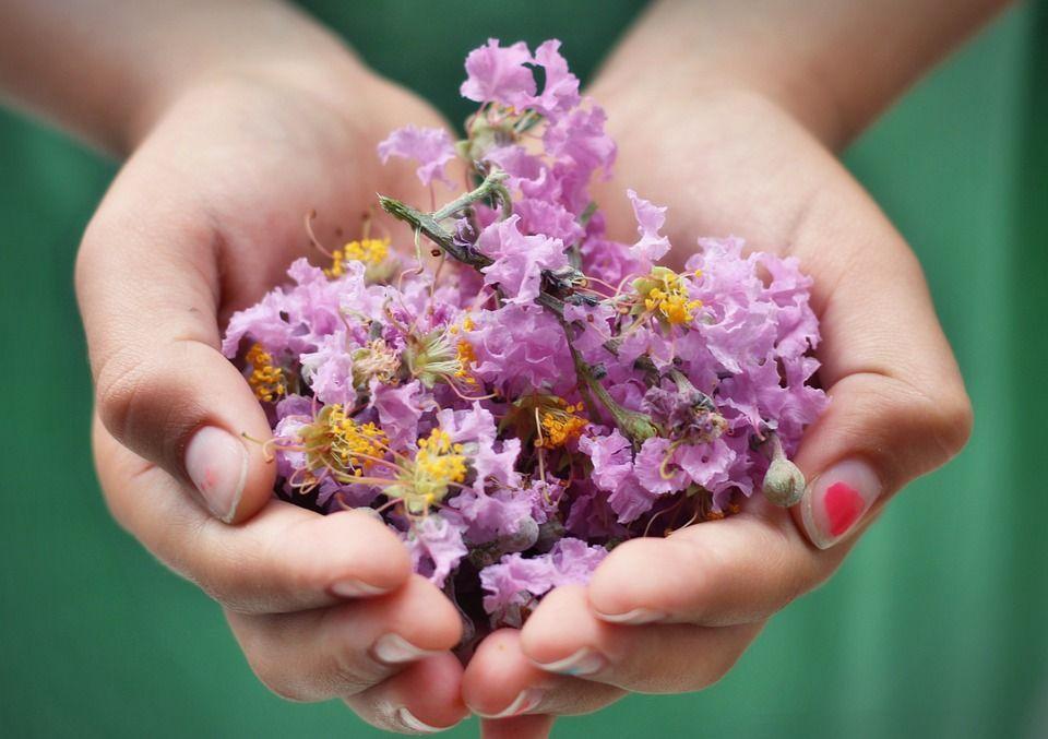plantas-armonizar-atraer-amor
