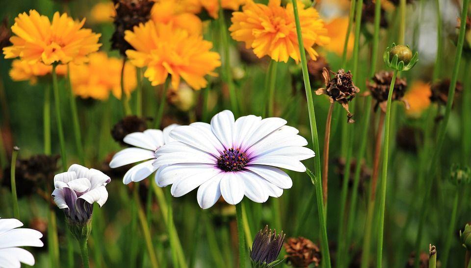 plantas-armonizar