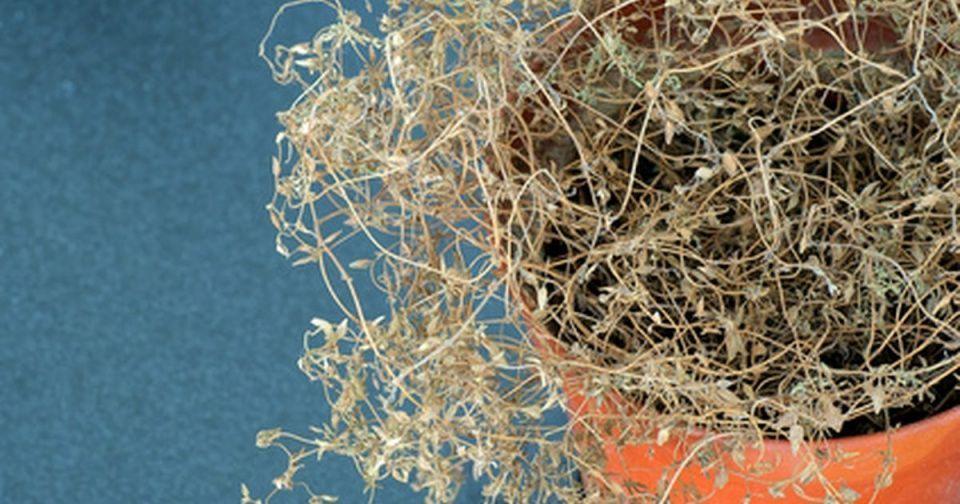 plantas-secado