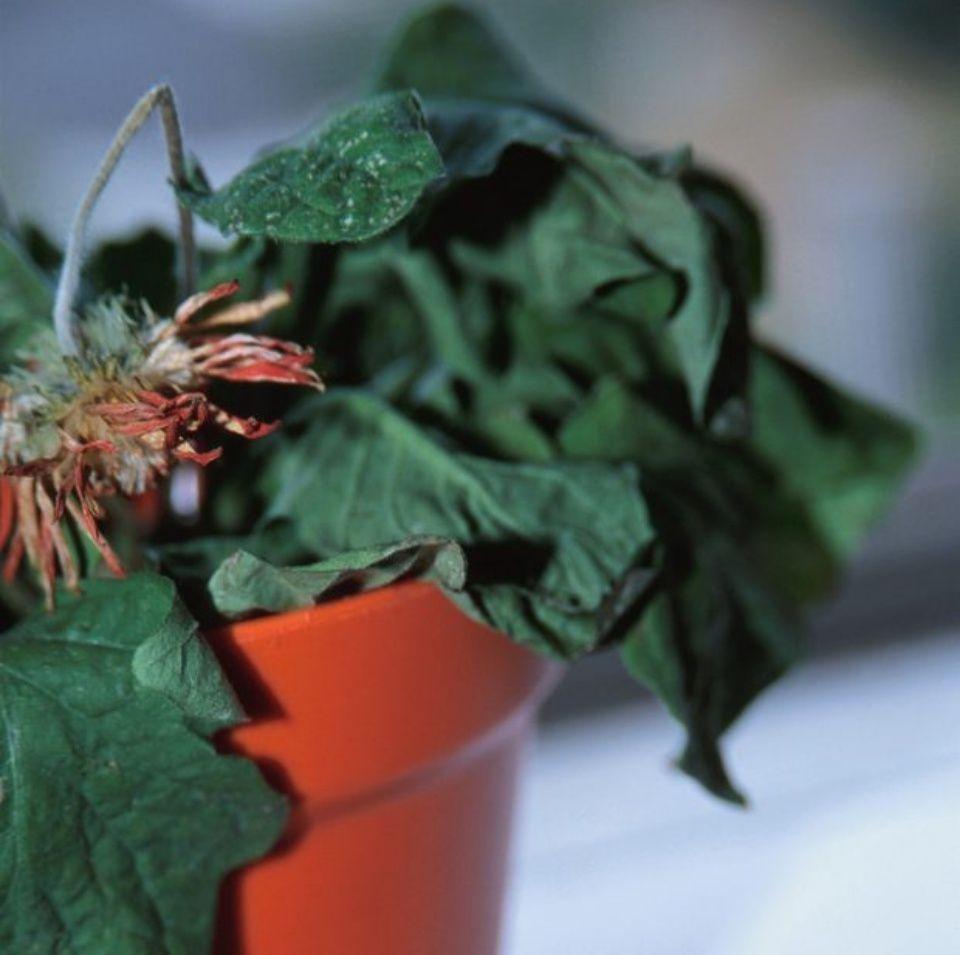 plantas-secas